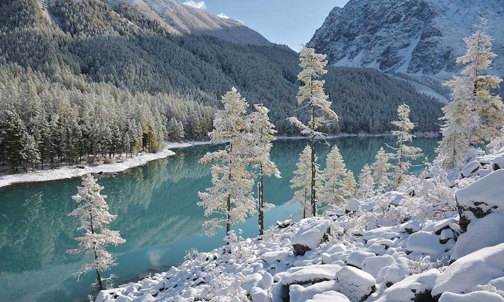 Altai Rivers Chaga